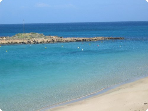 fig tree bay cipro