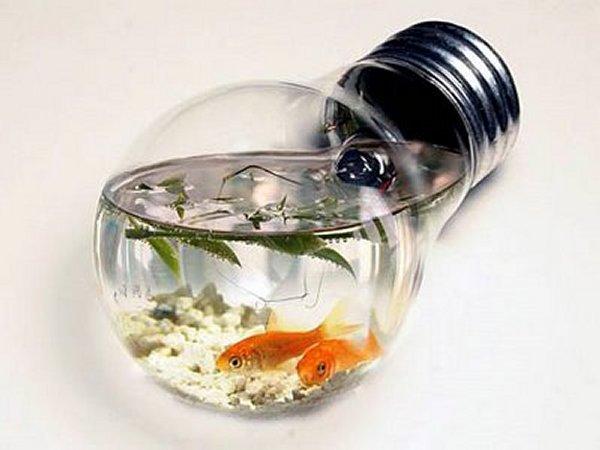 Acquario lampadina