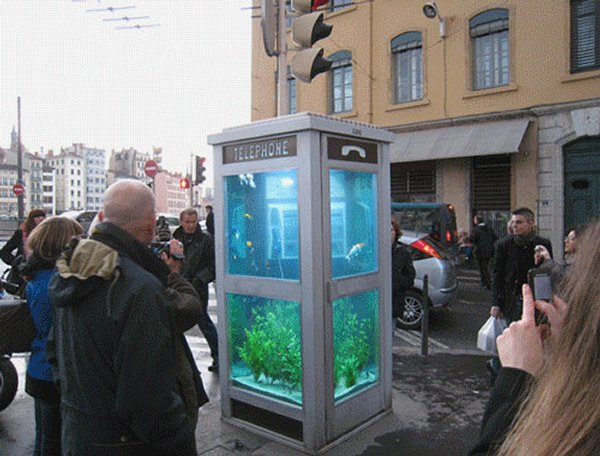 Acquario cabina telefonica