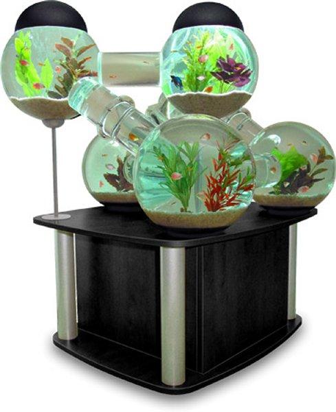 Acquario labirinto