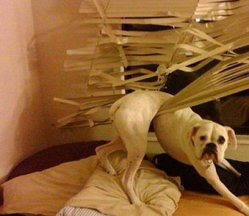 cane nella tenda