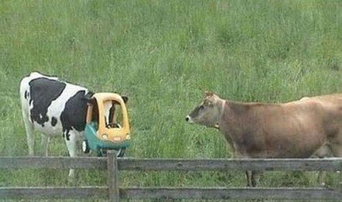 mucca con carrello spesa