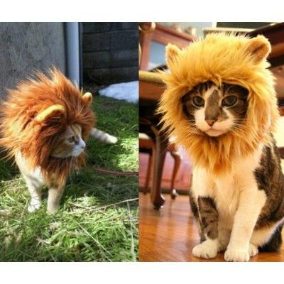 criniera da leone per gatti