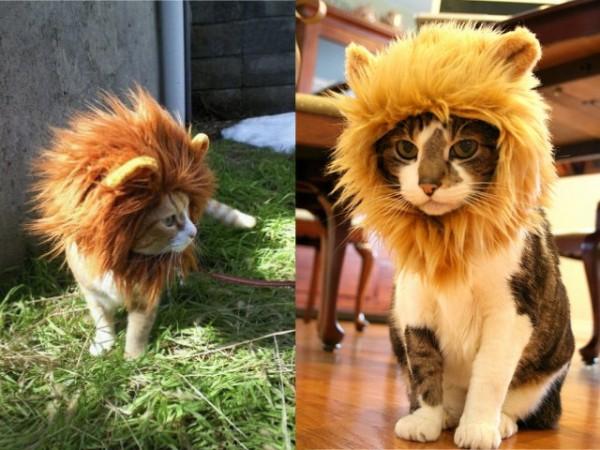 criniera leone gatto