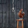 gallina suicida