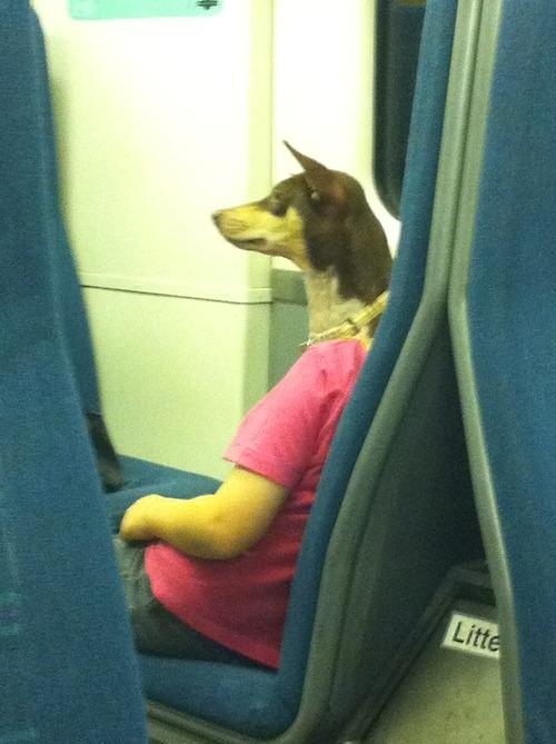 uomo con testa di cane