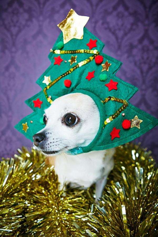 cappello albero di natale cane