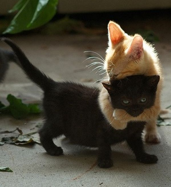 abbraccio-gattini
