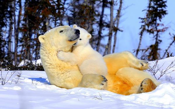 abbraccio-orsi