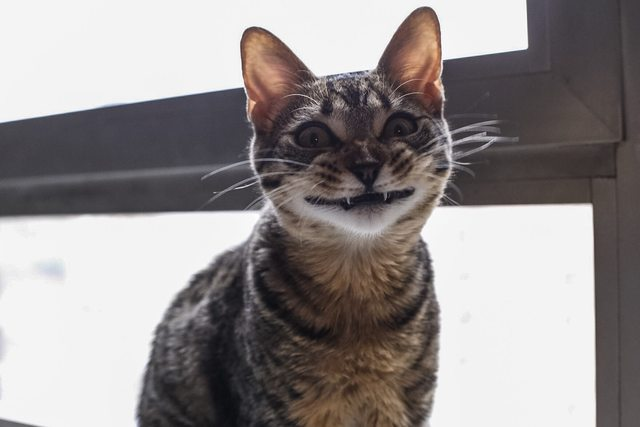 falso sorriso