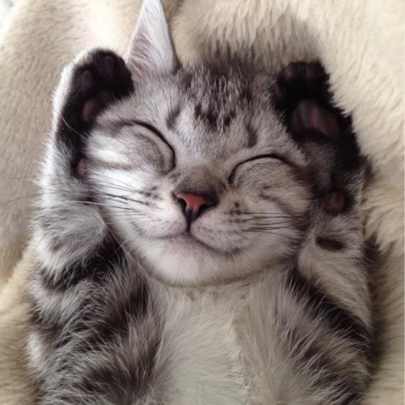 Top 10 dei gatti che sorridono alla vita