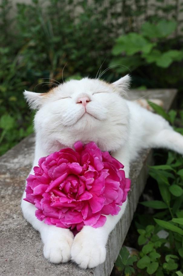 rosa regalo